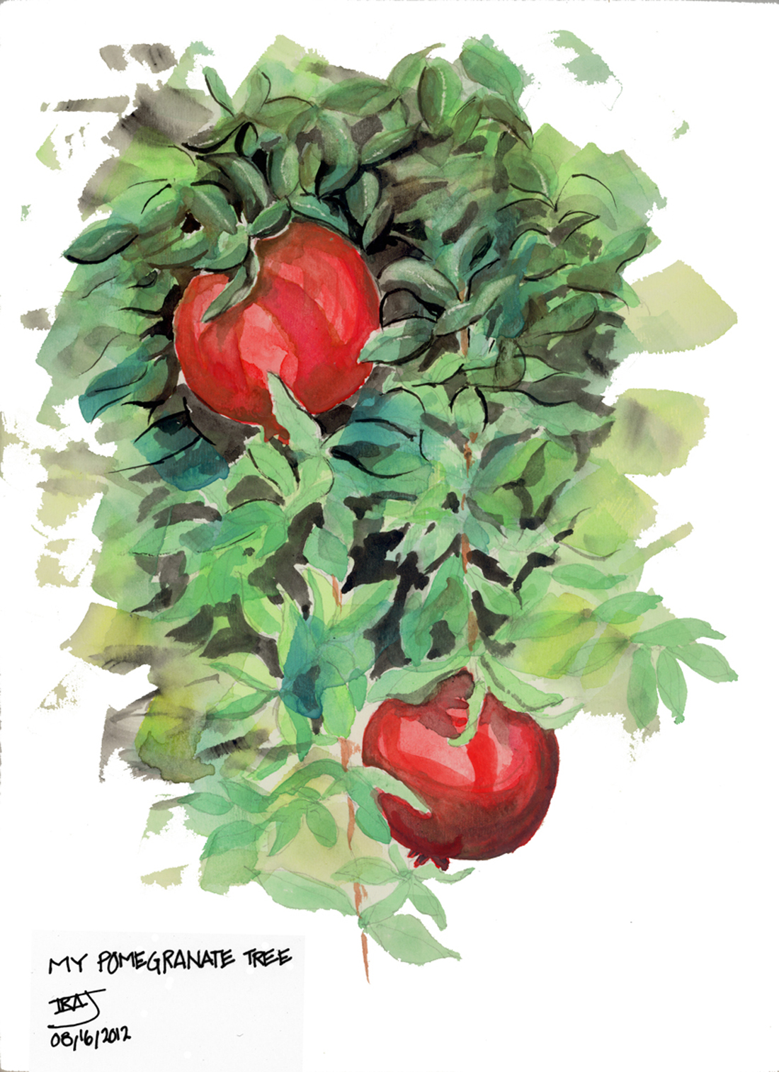 WATER-COLORS/My-Pomegranate-Tree.jpg