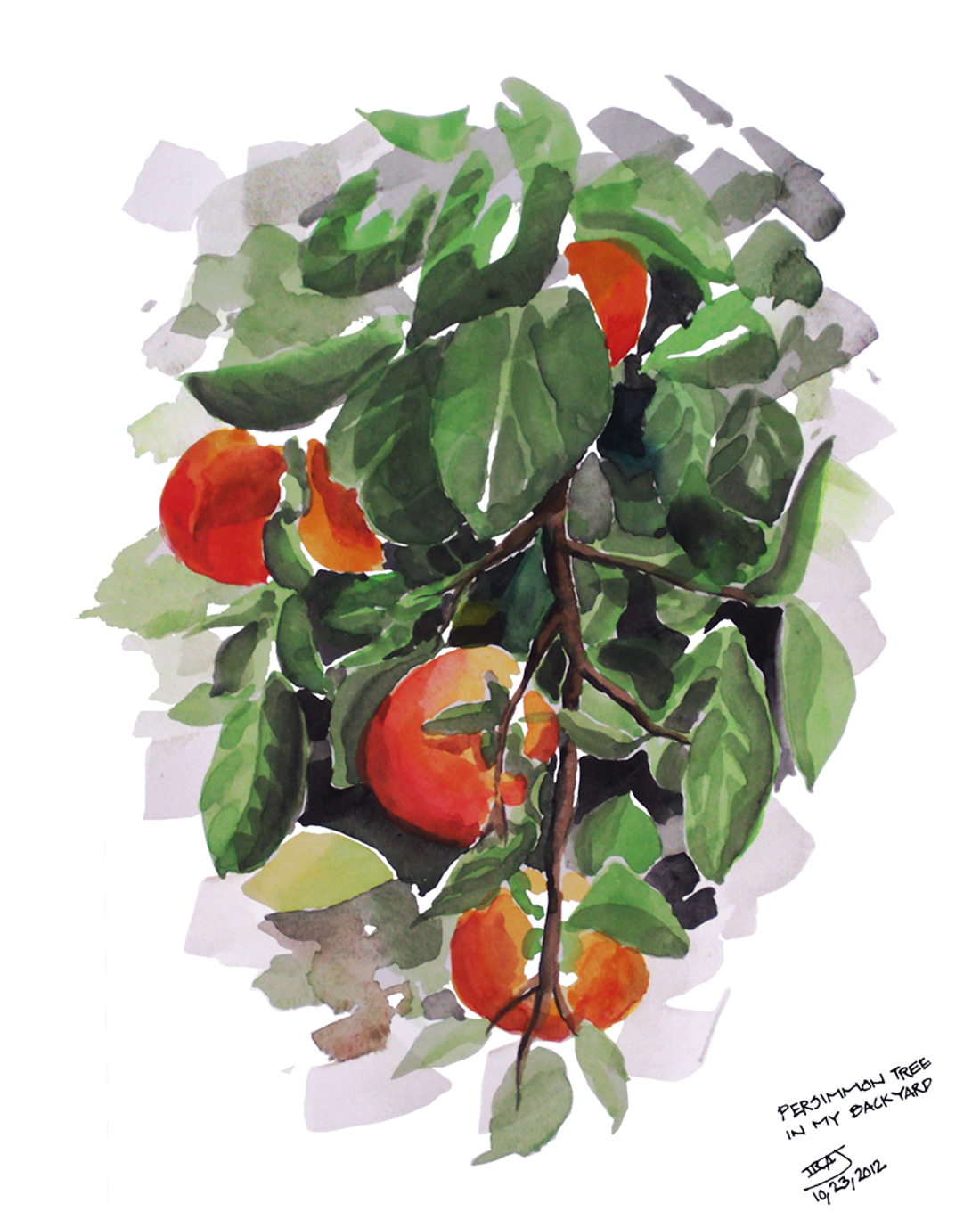 WATER-COLORS/Persimmons-6.jpg